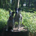 Vanilia und Conner beim gemeinsamen Spaziergang im Dorney