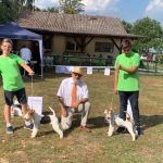 Junior Handling Altersklasse 1 : Max und Silas